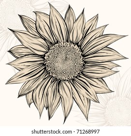 Sunflower.Drawing