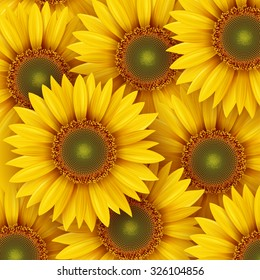 Sunflowers background, vector illustration.