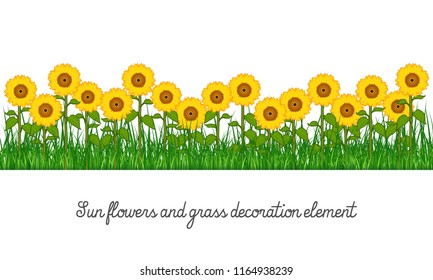 Sunflowers and grass decoration element, isolated on transparent background, cartoon vector illustration.