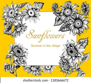 Sunflowers. Vector illustration in vintage style.