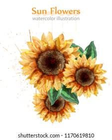 Sunflowers watercolor style isolated on white Vector. Beautiful floral decor templates