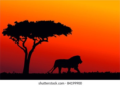 Lion King Tree Images Stock Photos Vectors Shutterstock