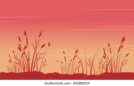 At sunrise with coarse grass scenery silhouettes