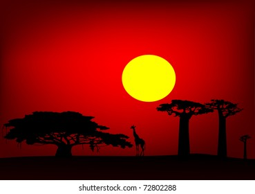 sunset in Africa - vector