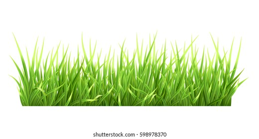 Super realistic, detailed fresh green vector grass. Isolated plant stems for front plan nature illustration. Gradient mesh tool.