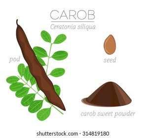 Superfood carob vector set with pod, leaves, seed and powder.