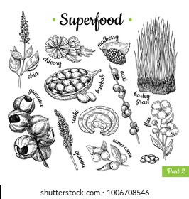 Superfood hand drawn vector illustration. Botanical isolated sketch drawing. Chia, wheat grass, baobab, guarana, acai, flax, camu camu. Organic healthy food. Great for banner, poster, label