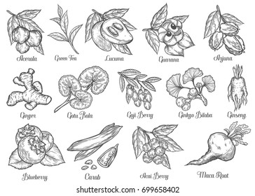 Superfood hand drawn vector illustration. Superfood plant, root, berry, nut, herb. Antioxidant, energetic food and beverage ingredients. Engraving sketch Health food. Isolated on white bakground.