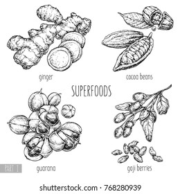 Superfood hand drawn vector illustration. Ginger, goji berries, guarana, cocoa beans on white background. Healthy food. Engraving sketch vintage style