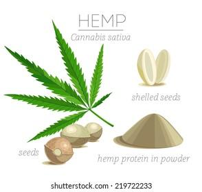 Superfood hemp protein. Leaf, seeds and powder.