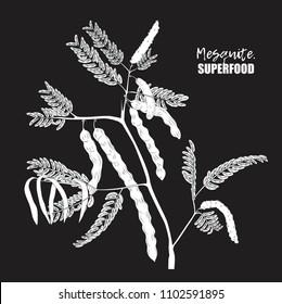 Superfood. Mesquite tree.