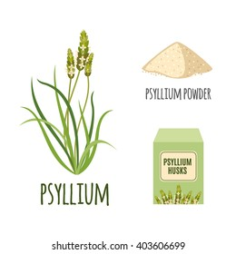 Superfood psyllium set in flat style: psyllium grass, powder, husks. Organic healthy food. Isolated objects on white background. Vector illustration