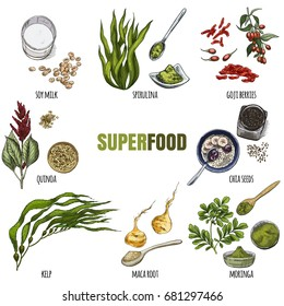 Superfood set. Full color realistic sketch vector illustration.