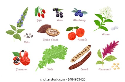 Superfood set. Vector illustration of Chia, Goji, Acai, Blueberry, Cocoa beans and Acerola isolated on white background. Stevia, Guarana, kale, Carob and Amaranth in cartoon flat simple style.