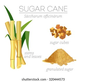 Superfood sugar cane vector set. Stalk with leaves and granulated sugar.