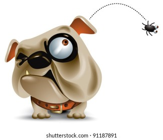 surly bulldog looks up at a flea