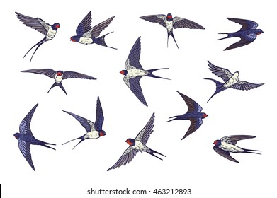 swallow bird color set