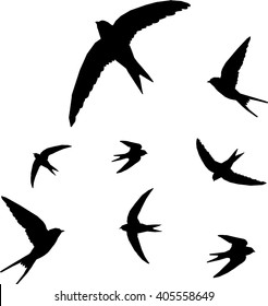 swallow, bird silhouette - vector illustration