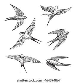 swallow line set