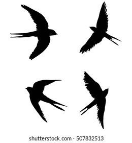 swallow set - vector, illustration