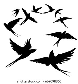 swallow silhouette, vector, illustration