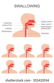 swallowing process, nose throat anatomy, medical illustration