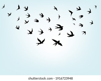 swallows. Black silhouette on a white background. Silhouette of a swarm of swallows. Black contours of flying birds. Flying swallows. Tattoo vector illustration isolated on blue background.
