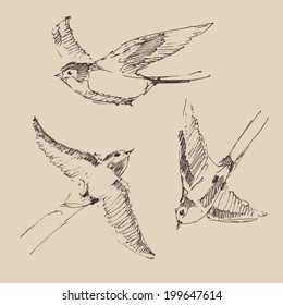 swallows flying bird set (collection) vintage illustration, engraved retro style, hand drawn, sketch
