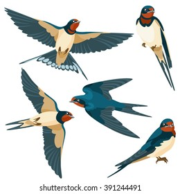 Swallows on white background / Three are two sitting swallows and three flying swallows in cartoon style