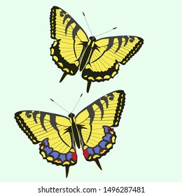 Swallowtail butterflies isolated vector image