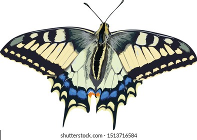 swallowtail butterfly on white background