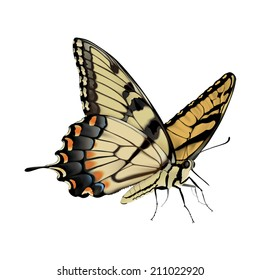 Swallowtail Butterfly - Papilio glaucus Photo-realistic hand drawn vector illustration of an Eastern Tiger Swallowtail Butterfly, on white background.