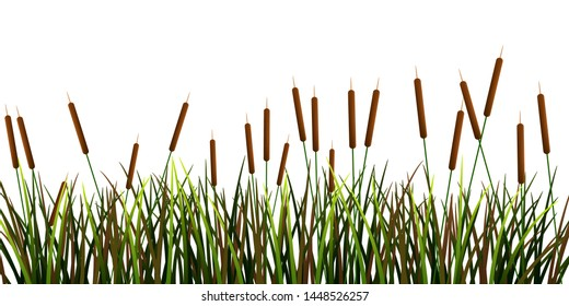 Swamp canes Water Reed Plant Cattails Green Leaf Grass in Swamp,Lake and River graphic vector