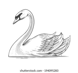 Swan in engraving style.  Vector illustration, isolated, grouped, transparent background