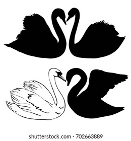 Swan, silhouette, vector, illustration