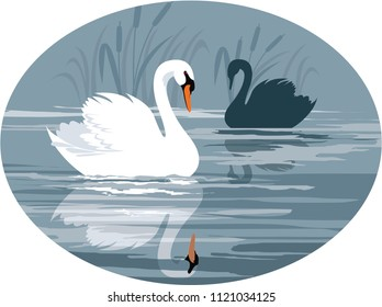 Swans gliding on the lake