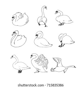 Swans sketch collection isolated on white background. Outline swans set vector illustration.