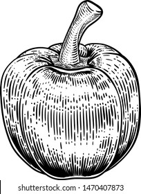 A sweet bell pepper food vegetable graphic. Original illustration in a vintage engraving woodcut etching style.