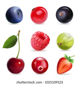 Sweet berries, vector illustration realistic set