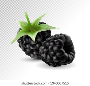 Sweet blackberries on the transprent background. Vector realistic blackberry, bramble, dewberry, 3d illustration