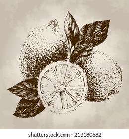 sweet lemon hand drawn in retro engraving style (old design) - vector illustration