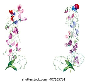Sweet pea flowers. Frame from flowers. Hand drawn vector illustration. Greeting cards. Flower backdrop. Place for your text.