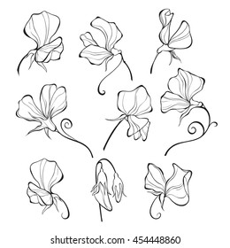 Sweet peas. Vector floral set. Flowers isolated on white background.
