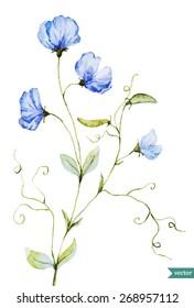 sweet peas, watercolor, flowers, delicate, vintage,