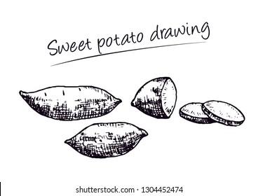 Sweet potato drawing