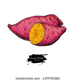 Sweet potato hand drawn vector illustration. Isolated Vegetable sliced object. Detailed vegetarian food drawing. Farm market product. Great for menu, label, icon