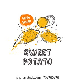 Sweet potato isolated set. Hand drawn vector illustration with watercolor splash. Can be used for street festival, farmers market, country fair, shop, menu, cafe, restaurant, poster, banner.