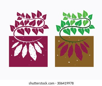 sweet potato plant with leaves and tubers,vector illustration