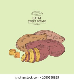 Sweet potato: root and sweet potato slice. Vector hand drawn illustration.