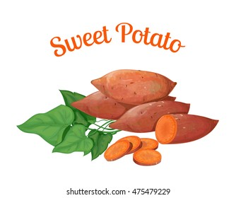 Sweet potato. Vector illustration made in a realistic style, on a white backgrou.nd